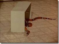 S2E17_Snake